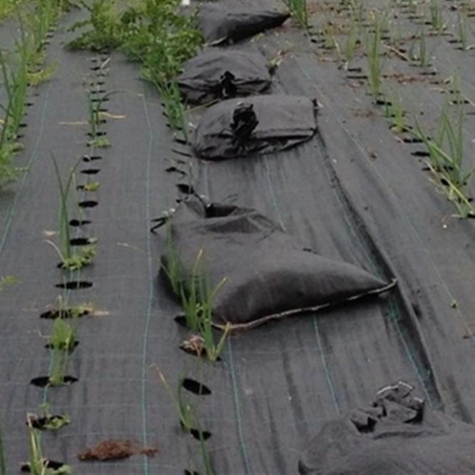 esteira de erva daninha plástico, pára ervas daninhas, mat erva daninha / tecido cobertura do solo / cobertura morta do solo / anti-grama pano controle mat / erva daninha com buracos