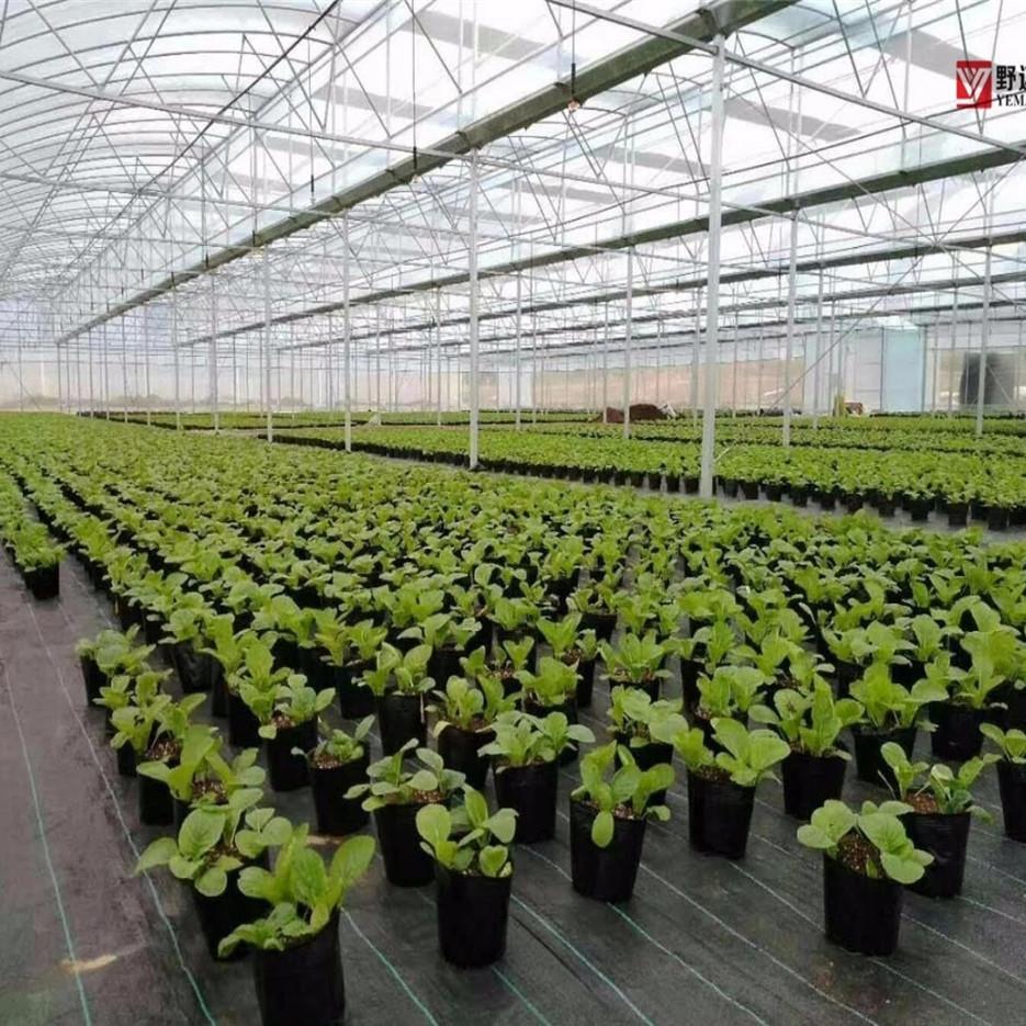 Capa preta à terra para plantas