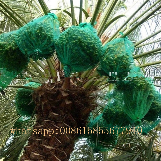 Protect bag date palm tree net PE mesh bag