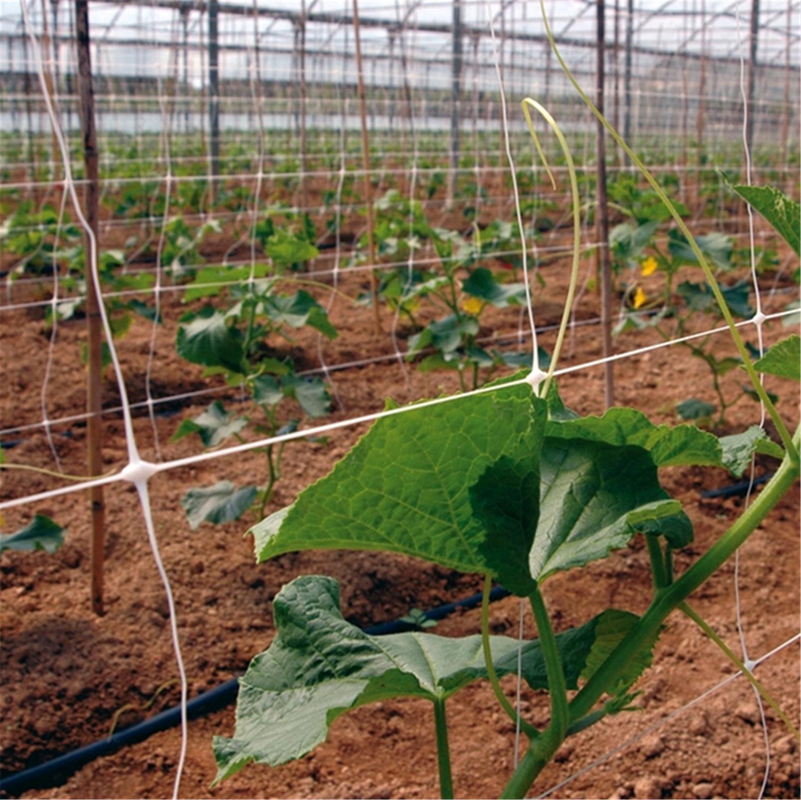 comment acheter un filet de treillis, filet/filet de soutien pour plantes? (fabricant)